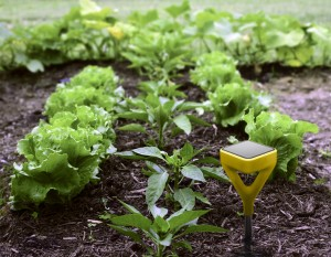 Solar-powered soil sensor