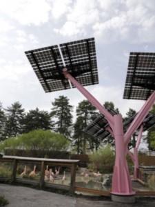 solar PV flamingos